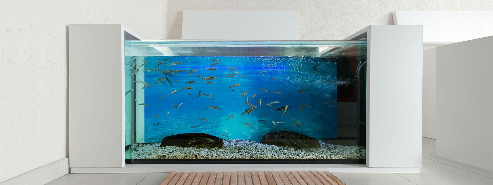 Knabber-Spa Design-Aquarien für Kangalfische B2B