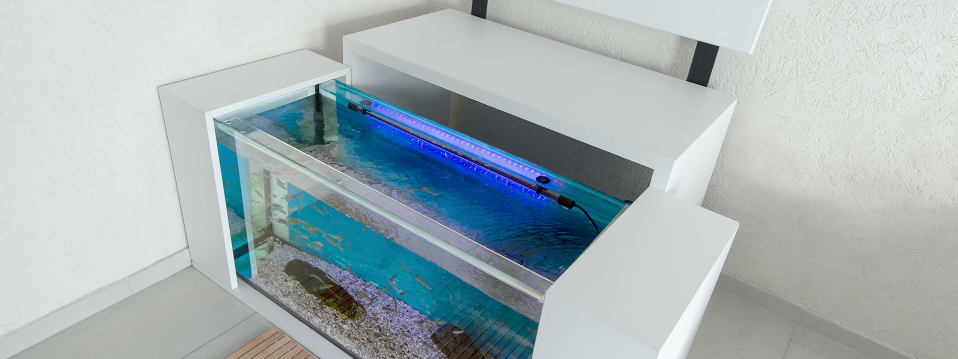 Knabber-Spa Design-Aquarien für Fischpediküre B2B