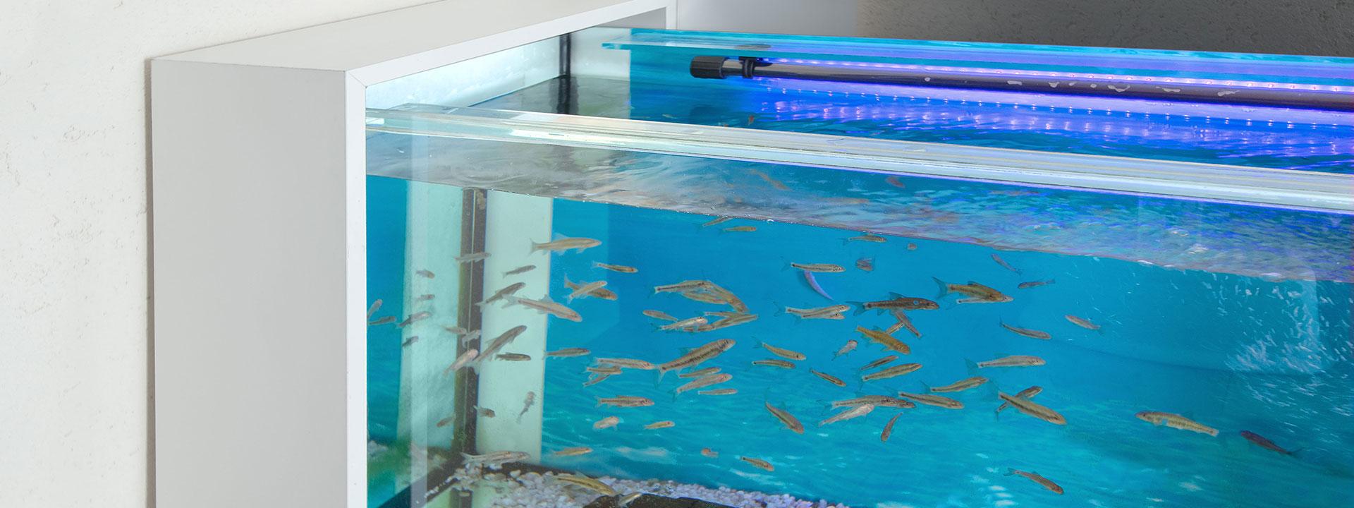 Knabber-Spa Design-Aquarien für Garra Rufa B2B